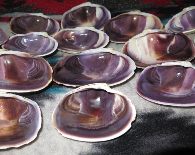 Crafters- Wampum Quahog Clam Shell Jewelrygrade Purple Quahog Each Half Shell Rare since the days of Roger Williams