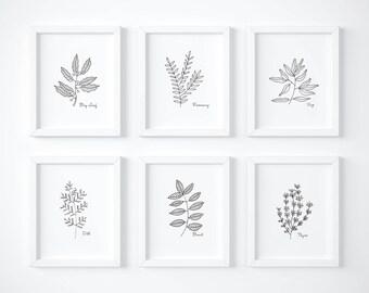 Kitchen Herb Prints, Hand Drawn Herbs, Set of Six, Basil, Sage, Thyme, Dill, Rosemary, Bay Leaf, Herb Prints, Kitchen Art