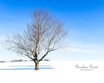 Shaw Farm Winter Wonderland - Glossy or Metallic Finish
