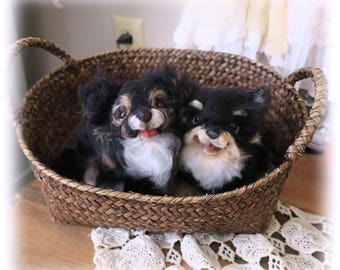 Reserved - Chihuahuas
