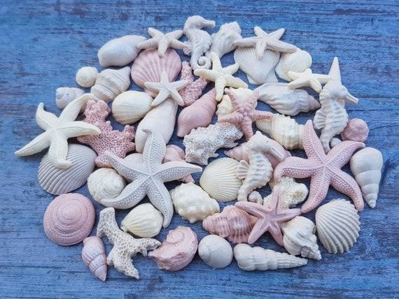 50 Edible sugar paste fondant cake decorations shells starfishes corals seahorse cake cupcake  mermaid topper