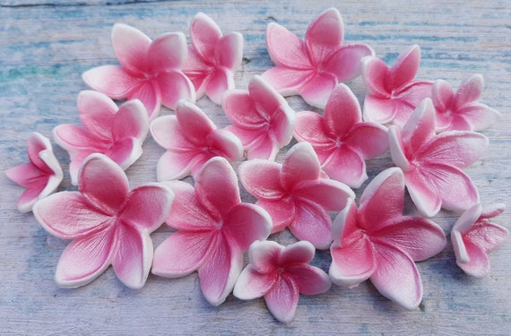 18 edible sugar paste fondant frangipani plumeria cake cupcake toppers decorations 3 sizes pink