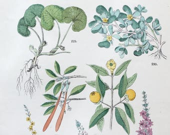 1883 Original Antique Lithograph, Botanical Lithograph, Botanical wall decor, Antique print, Botanical Illustration, Flower illustration