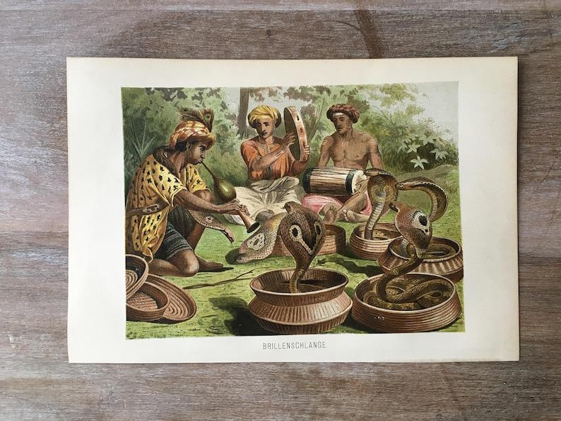 Antique cobras print Antique print cobra cobra wall art cobra art print 1892 Original Antique Cobra Chromolithograph