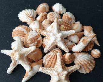 Realistic Seashells set x 30 Fondant Beige Cake/Cupcake decorations DIY