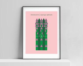 Hand-signed asparagus print kitchen art. Vegetable print, asparagus art, minimalist design, modern vegetable poster art, modern food poster