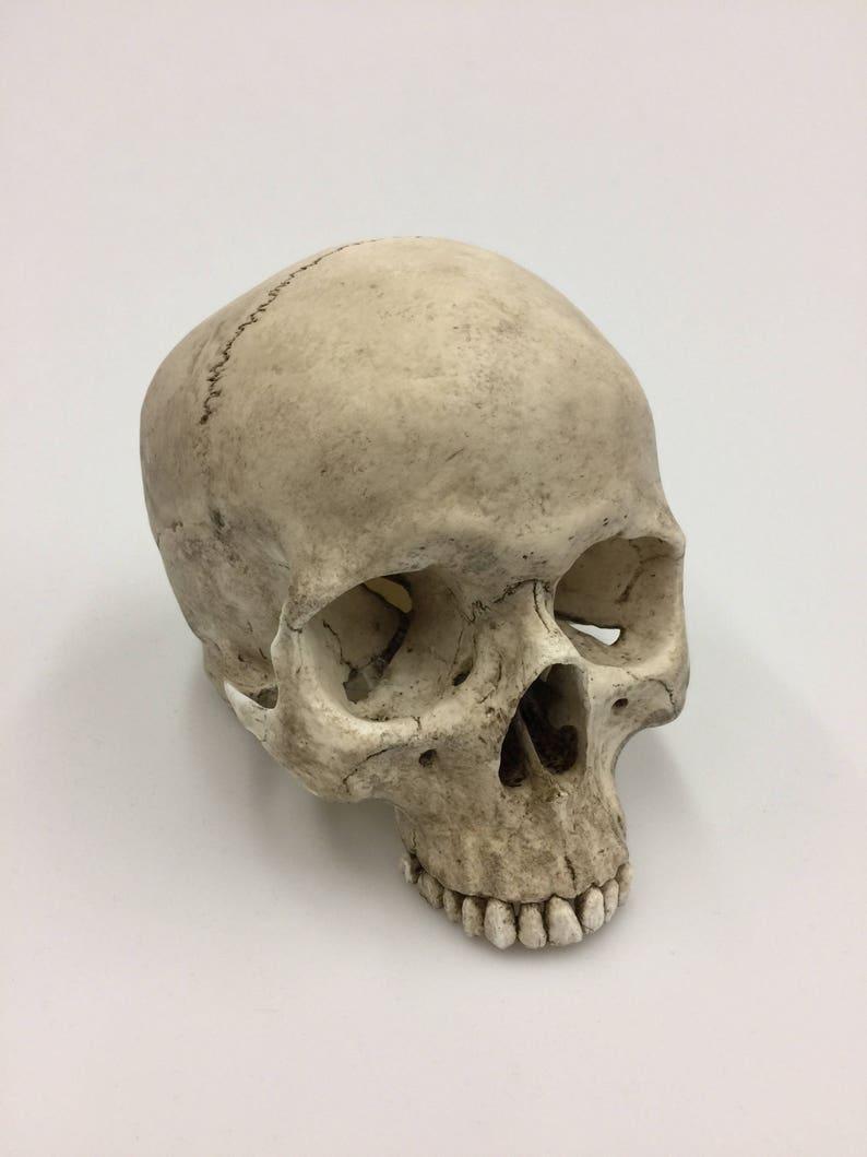 Human Skull Replica Full size image 0