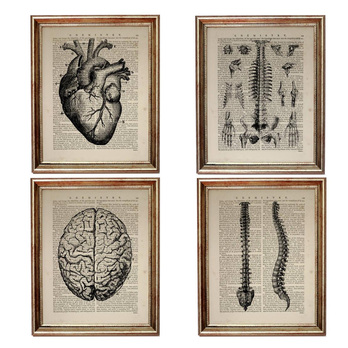 Set of 4 Prints Brain Poster Anatomy Art Chiropractic Art | Etsy