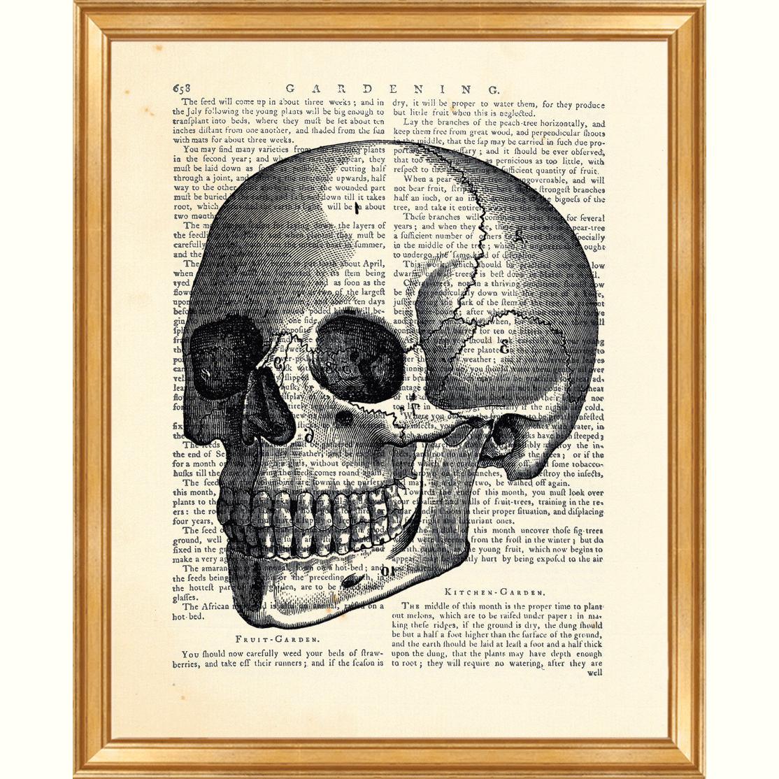 Schädel-Wand-Kunst Anatomie Kunst Wörterbuch Kunstdruck | Etsy