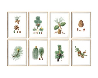 Pine cone Art Print SET of 8. pine cone prints, vintage pine cone, antique pine cone, pine cone decor, pine cone wall art, spa decor, pines