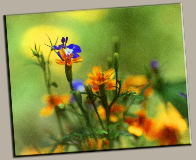 Yellow  Purple Flowers Gallery Wrap Canvas Photo Print Fine image 0