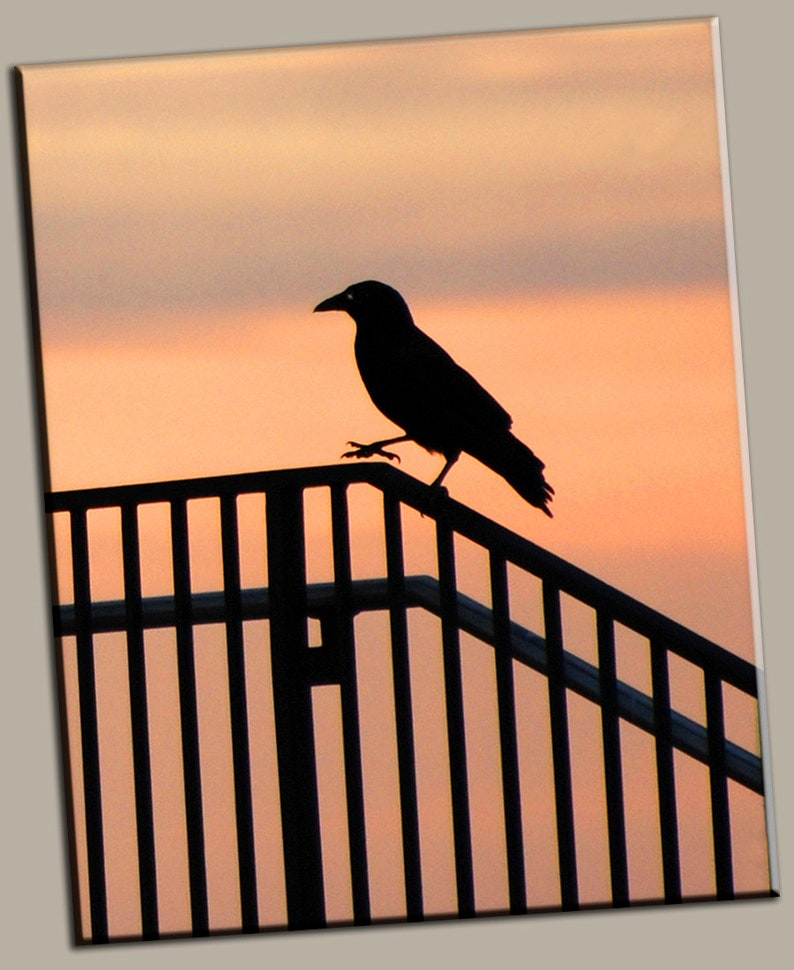 Bird on Fence Silhouette Gallery Wrap Canvas Photo Print Fine image 0