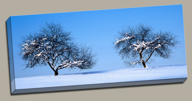 2 Trees in Snow Gallery Wrap Canvas Photo Print Fine Wall Art image 0