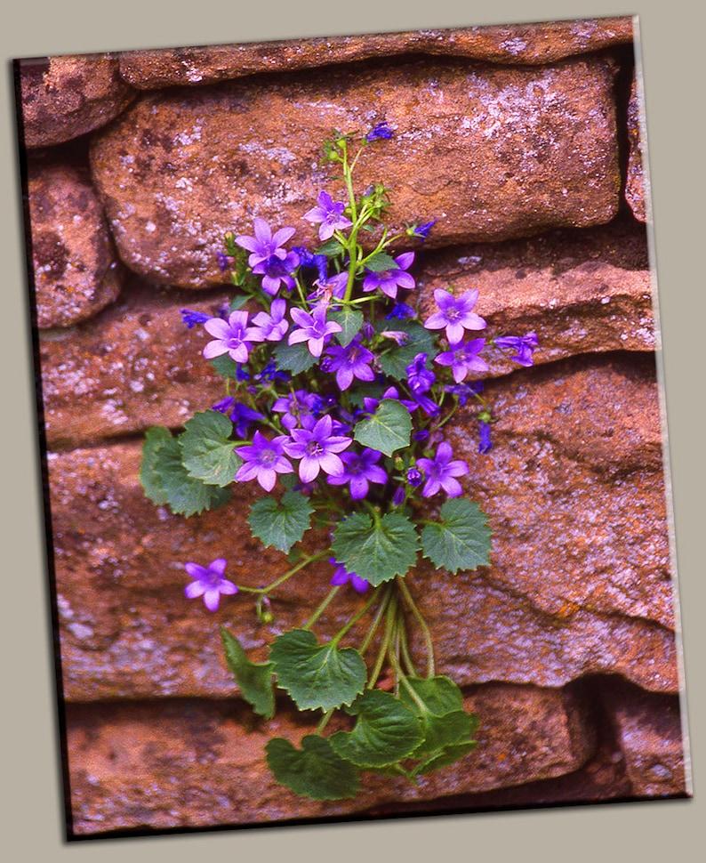 Purple Flowers on Stone Gallery Wrap Canvas Photo Print Fine image 0