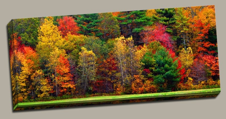 Autumn Forest Gallery Wrap Canvas Photo Print Fine Wall Art image 0