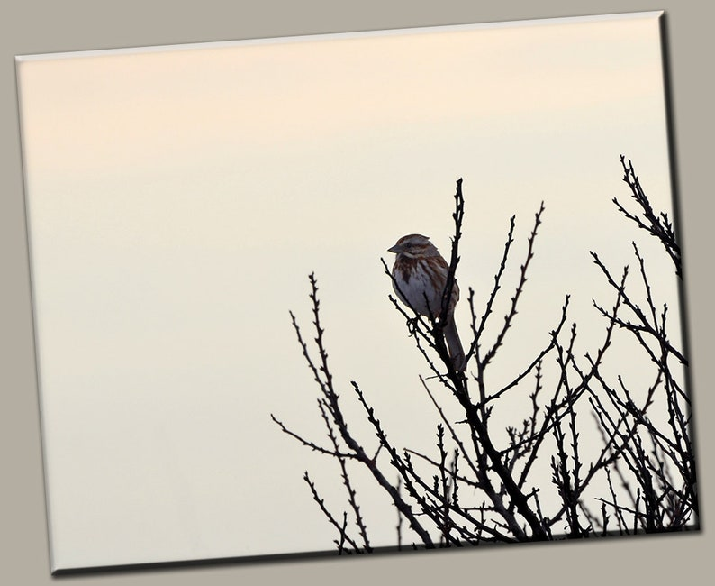 Bird in Tree Gallery Wrap Canvas Photo Print Fine Wall Art image 0