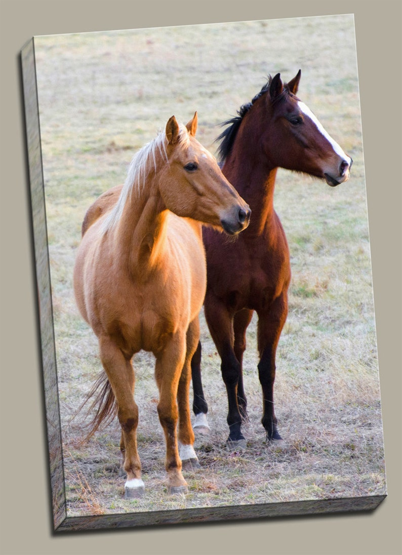 2 Horses Gallery Wrap Canvas Photo Print Fine Wall Art Brown image 0