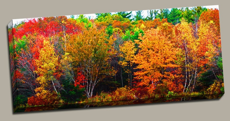 Fall Forest Gallery Wrap Canvas Photo Print Fine Wall Art image 0