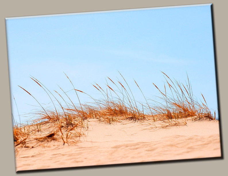 Beach Reeds Gallery Wrap Canvas Photo Print Fine Wall Art image 0