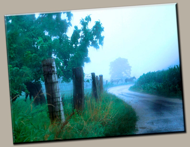 Horses in Mist Gallery Wrap Canvas Photo Print Fine Wall Art image 0