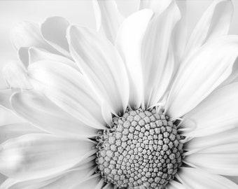 Daisy Photography Printable BW Digital Download Art Print