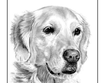 Golden Retriever Cards and Prints from Original Graphite Drawing
