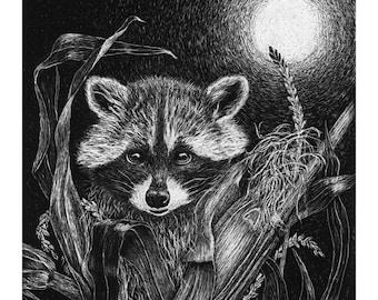 Mischievous Raccoon Cards & Prints from Original Scratchboard
