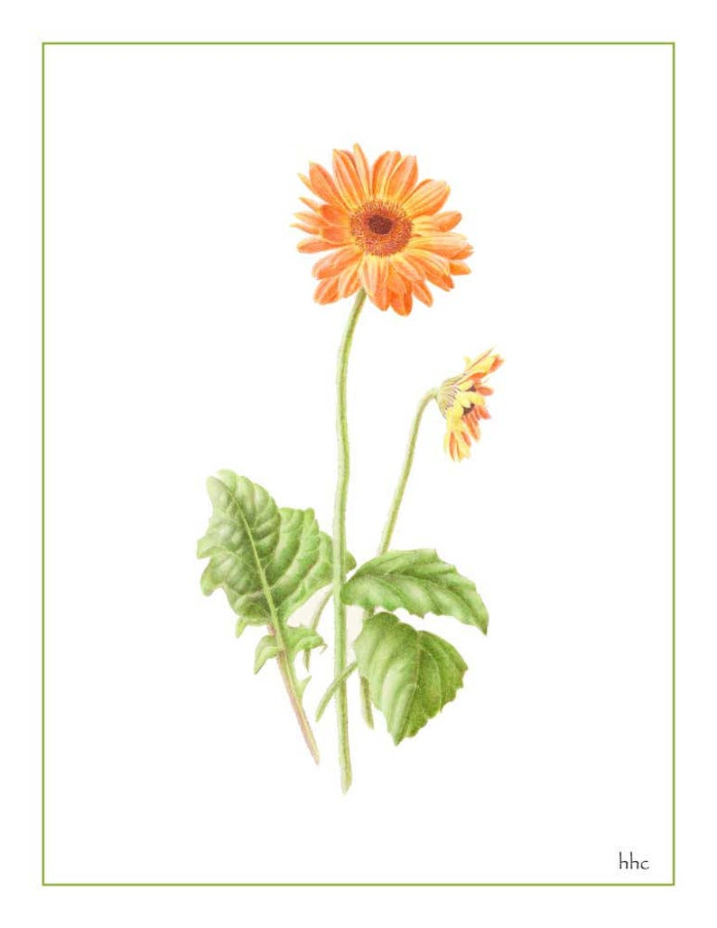 Gerbera Daisy Prints & Cards from Original Painting image 1