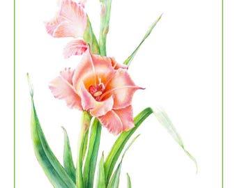 Gladiola Cards & Prints from Original Botanical Painting