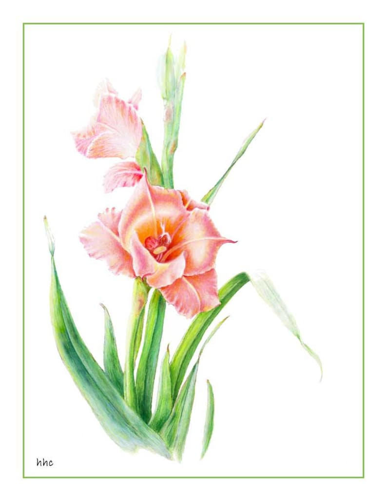 Gladiola Cards & Prints from Original Botanical Painting image 0