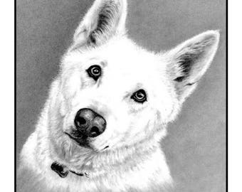 White German Shepherd Cards and Prints from Original Graphite Drawing