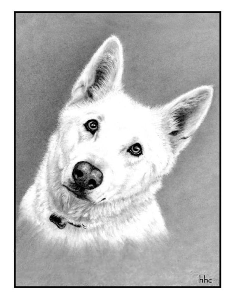 White German Shepherd Cards and Prints from Original Graphite image 0