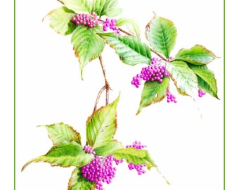 Fall Beauty Berry Cards & Prints from Original Botanical Painting