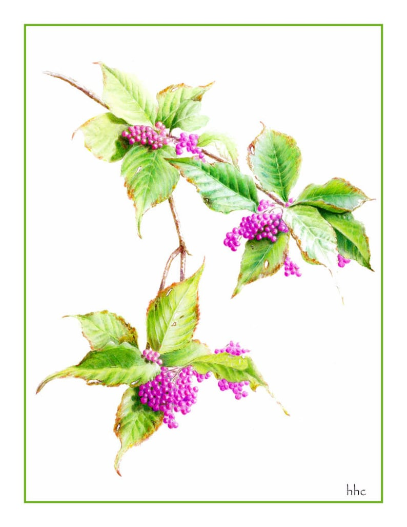 Fall Beauty Berry Cards & Prints from Original Botanical image 0