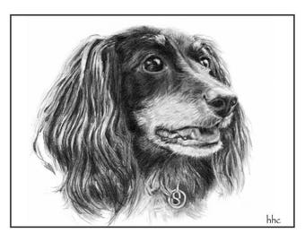 Long-Haired Dachshund Cards & Prints from Original Graphite Drawing