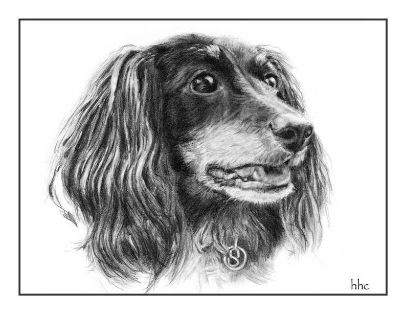 Long-Haired Dachshund Cards & Prints from Original Graphite image 0