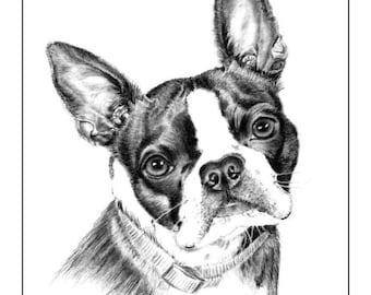Boston Terrier Cards & Prints from Original Graphite Drawing