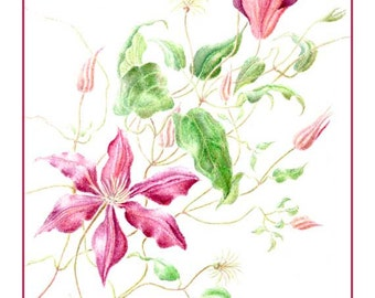 Climbing Clematis Card from Original Watercolor Painting