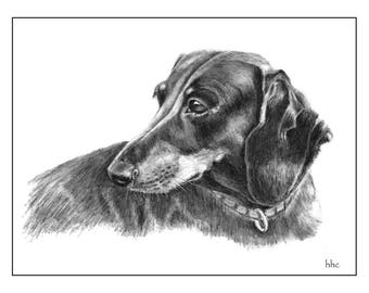 Dachshund Cards & Prints from Original Graphite Drawing