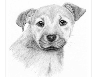 Mutt Pup Cards & Prints from Original Graphite Drawing