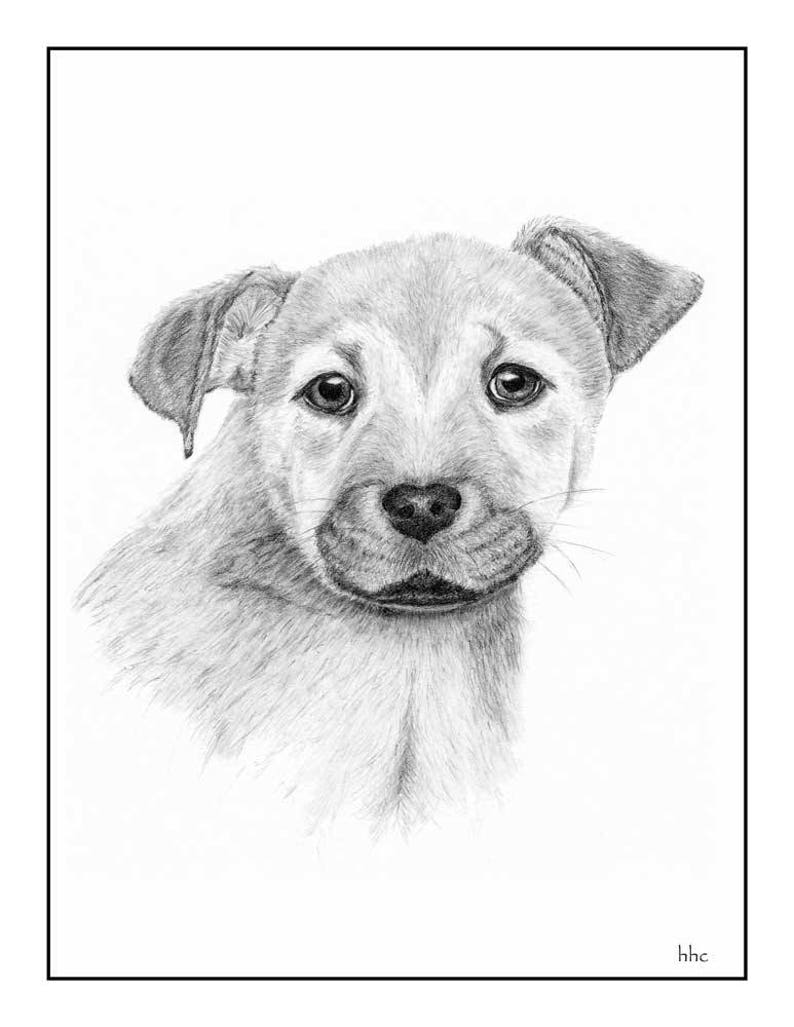 Mutt Pup Cards & Prints from Original Graphite Drawing image 0