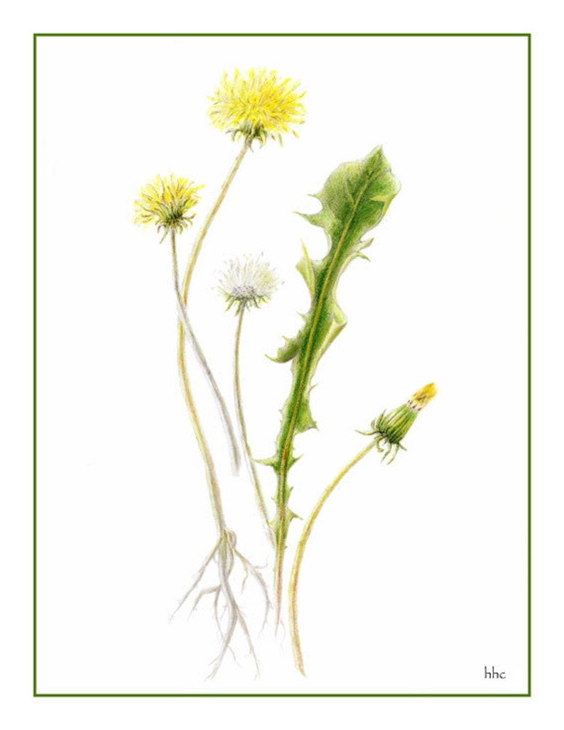 Dandelion cards and prints from mixed media original by image 1