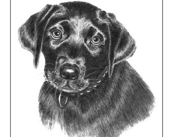 Black Lab Pup Cards and Prints from Original Graphite Drawing