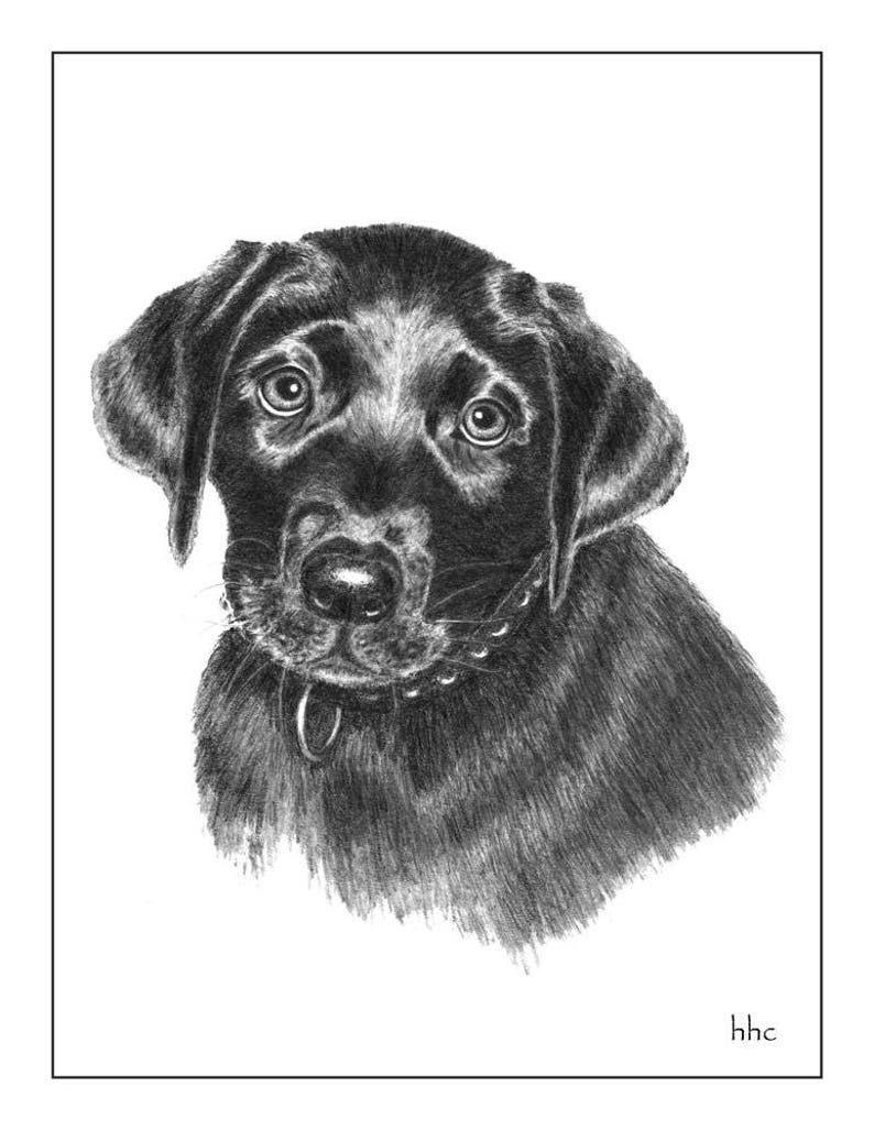 Black Lab Pup Cards and Prints from Original Graphite Drawing image 0