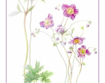 Japanese Anemones Cards and Prints from Original Botanical Painting
