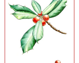 American Holly Holiday Card from Original Watercolor
