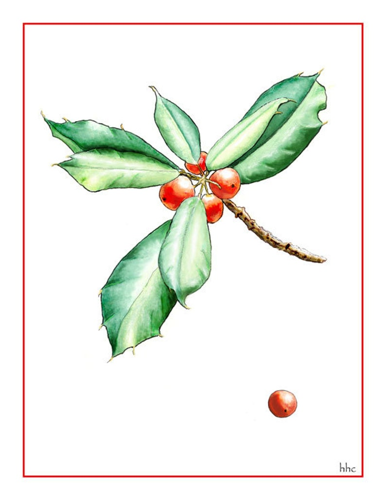 American Holly Holiday Card from Original Watercolor image 0
