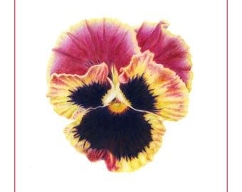 Pansy Cards & Prints from Original Botanical Painting