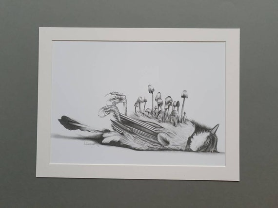 Beautiful Death Blue Tit with Toadstools Large Mount Art Print