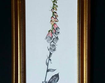 Faded Foxglove Original Drawing in Gold Frame